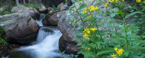 Behind the shot: Mills Lake flowers