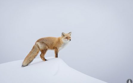 Upcoming Wildlife Photography Course